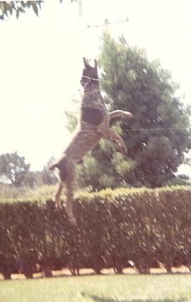Skip jumping