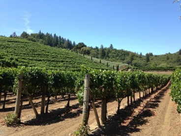 Sonomo County Grapes