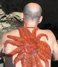 Sun Starfish