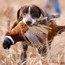 dog n pheasant