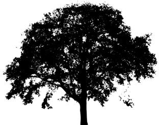 Tree Tag v2