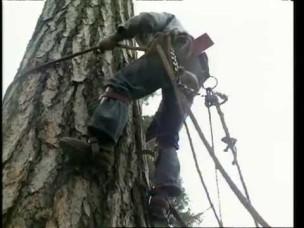 tree climbing tools