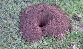 gopher mound