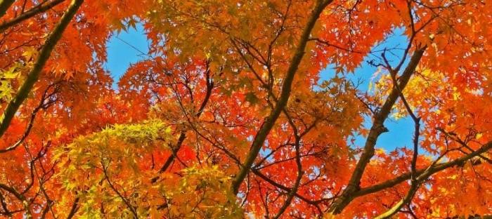 autumn-tree-leaves-.jpg