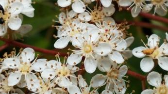hedge bloom 3