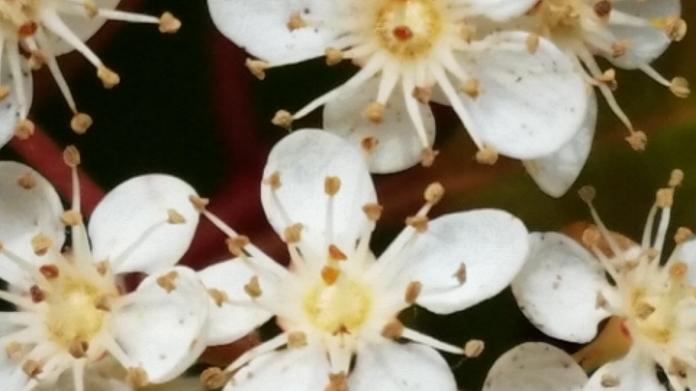 hedge bloom 5