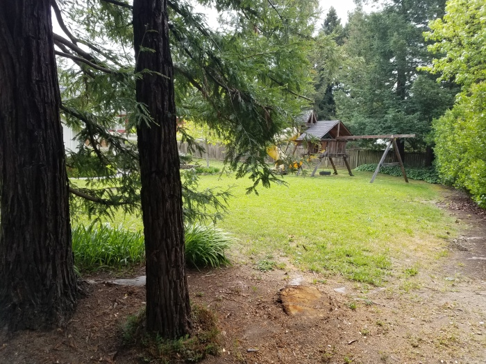 redwood tree gone