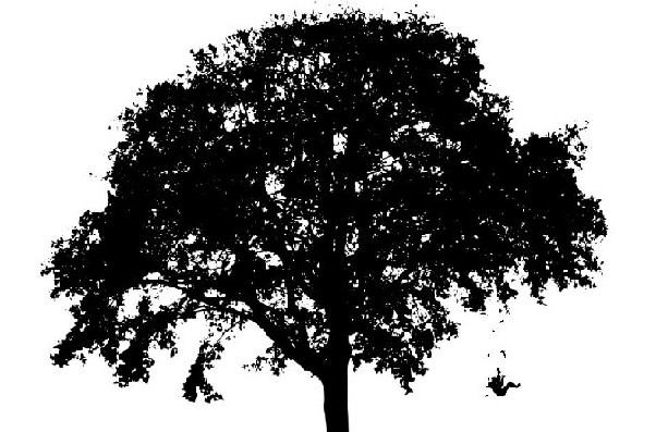 Tree Tag 65 pct cropped