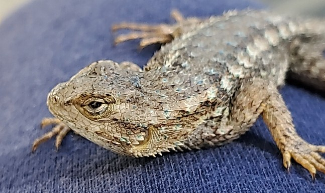 new lizard 210301-1