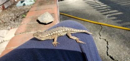 new lizard 210301-2