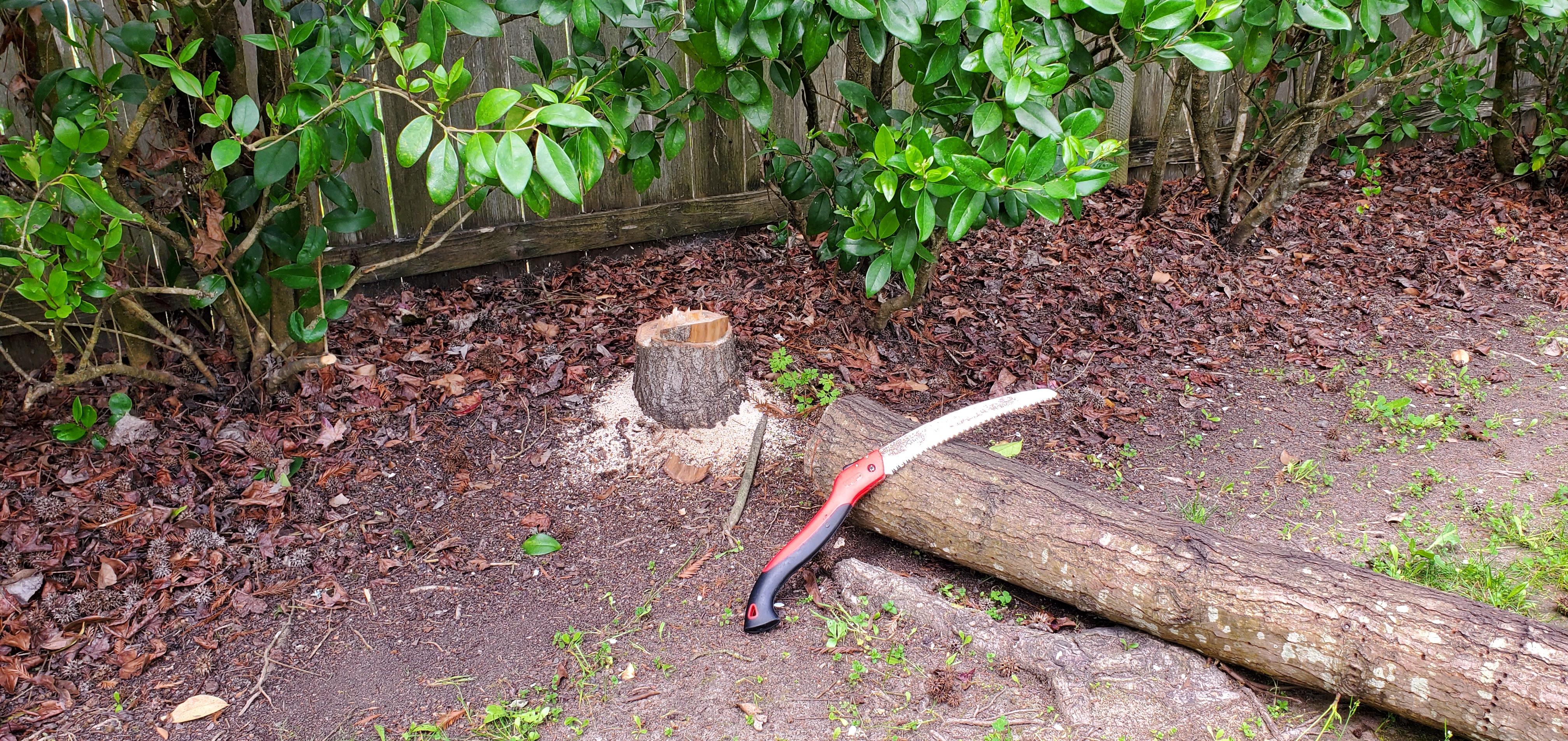 20210403_Dead Tree 3