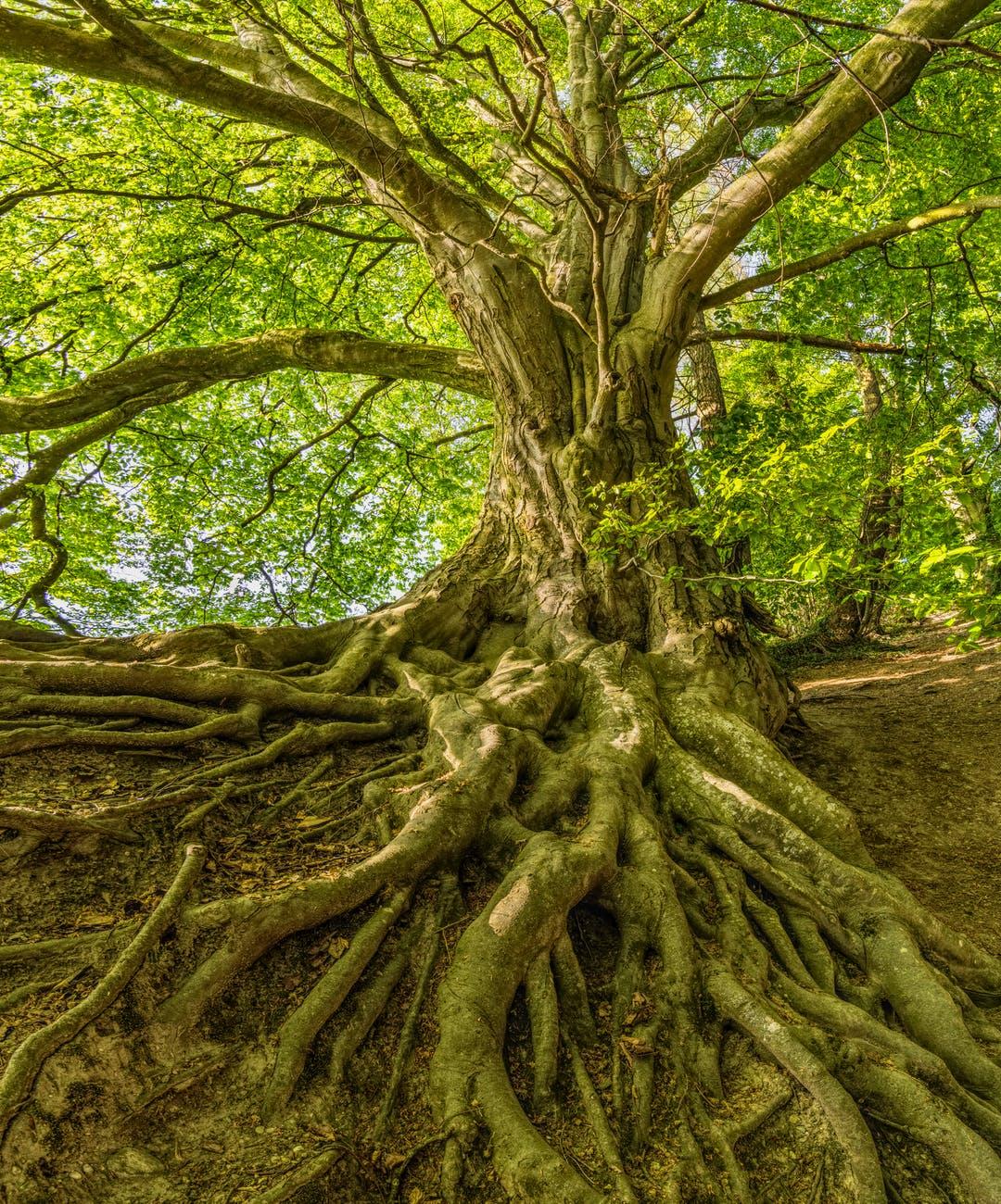 green tree photo
